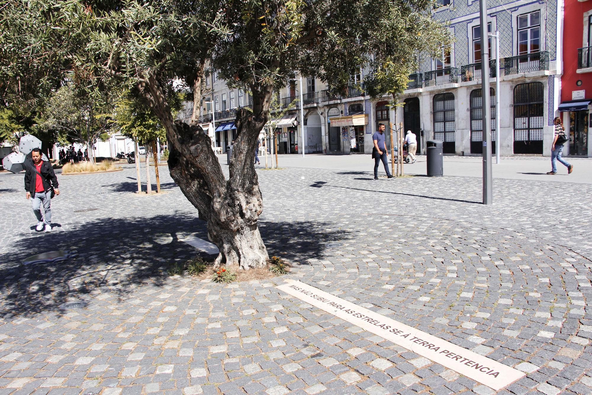 Oliveira onde as cinzas de José Saramago foram depositadas (CMMN, 2019)